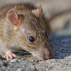 pests and rodents